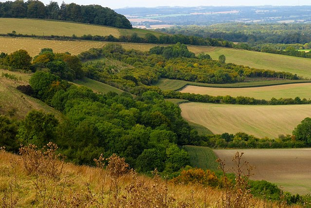 Fields and Woodland near Bottomstead Farm