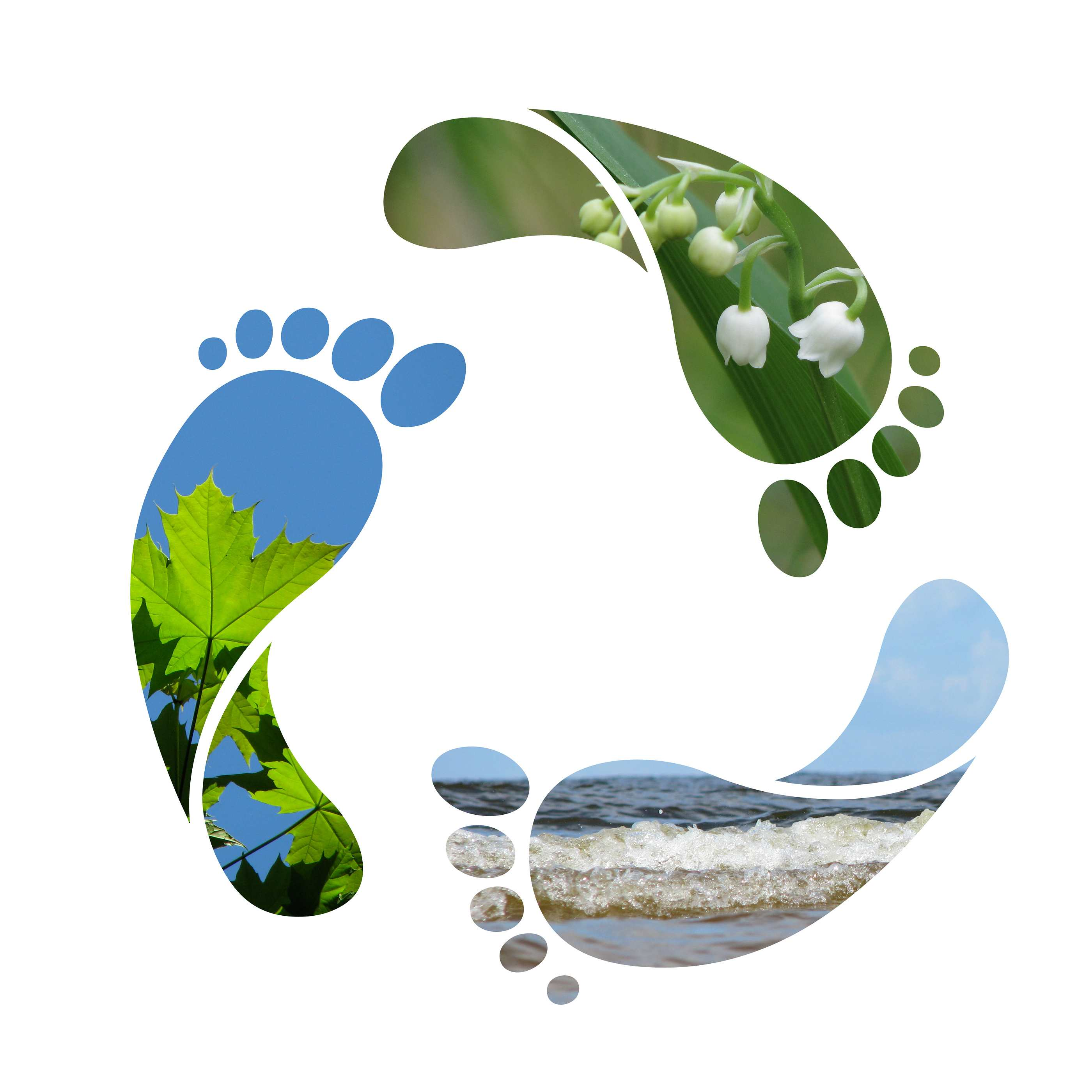 """the value of reducing carbon footprints environmental sciences essay """"carbon dioxide emissions essay agreed to reduce carbon emissions by 20% by the key factors being blamed for an increase in carbon footprints."""