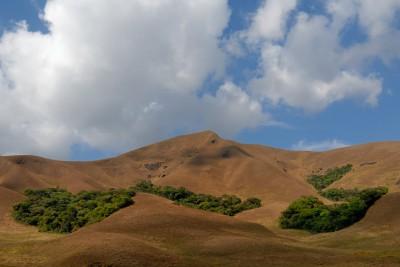 grassland-habitat