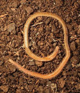 Soil fauna diversity