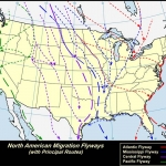 USGS-flyway-map