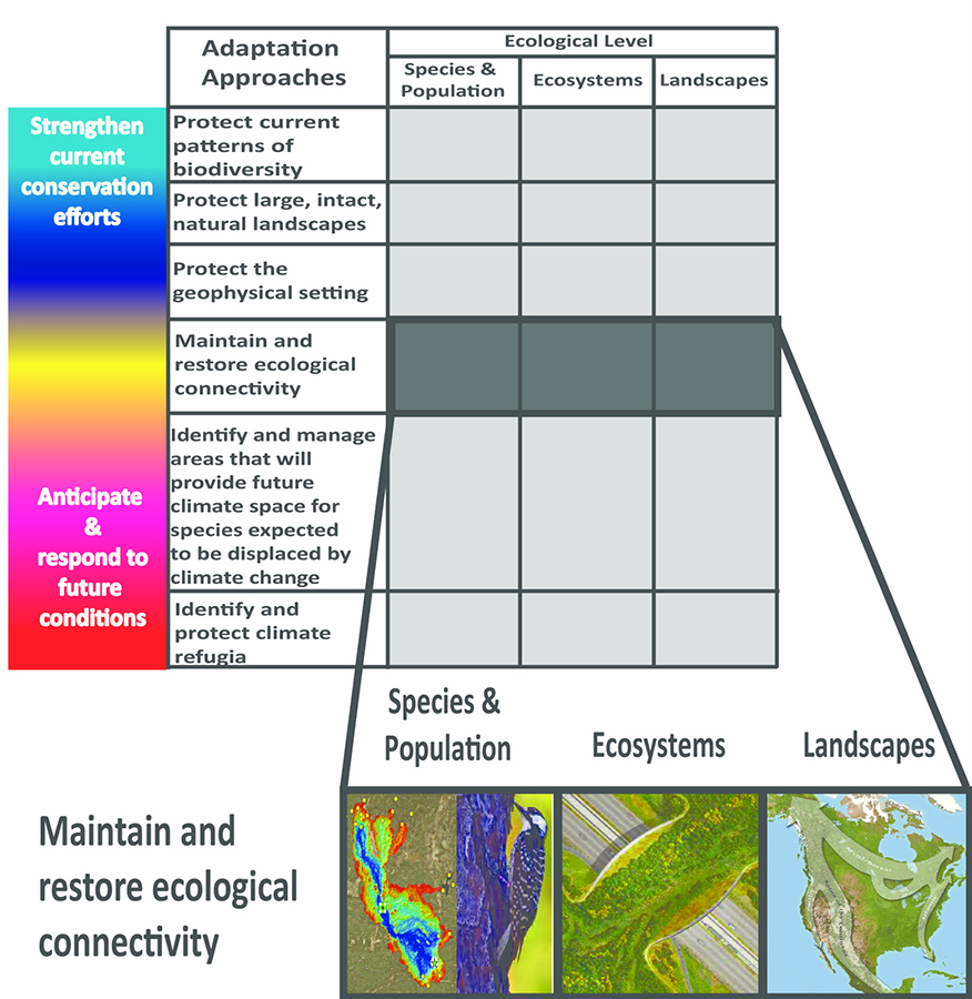 From Schmitz, O. J. et al. 2015. Creating biodiversity: practical guidance about climate change adaptation approaches in support of land-use planning. Natural Areas Journal 35(1): 190-203.