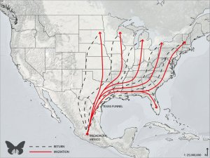 monarch_migrationmap