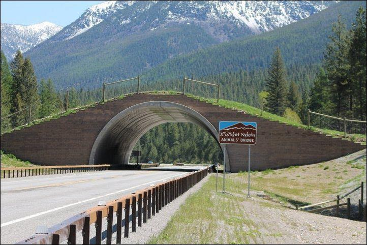 montana-usa-animal-bridge-wildlife-crossing-overpass