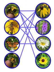 pollinator network