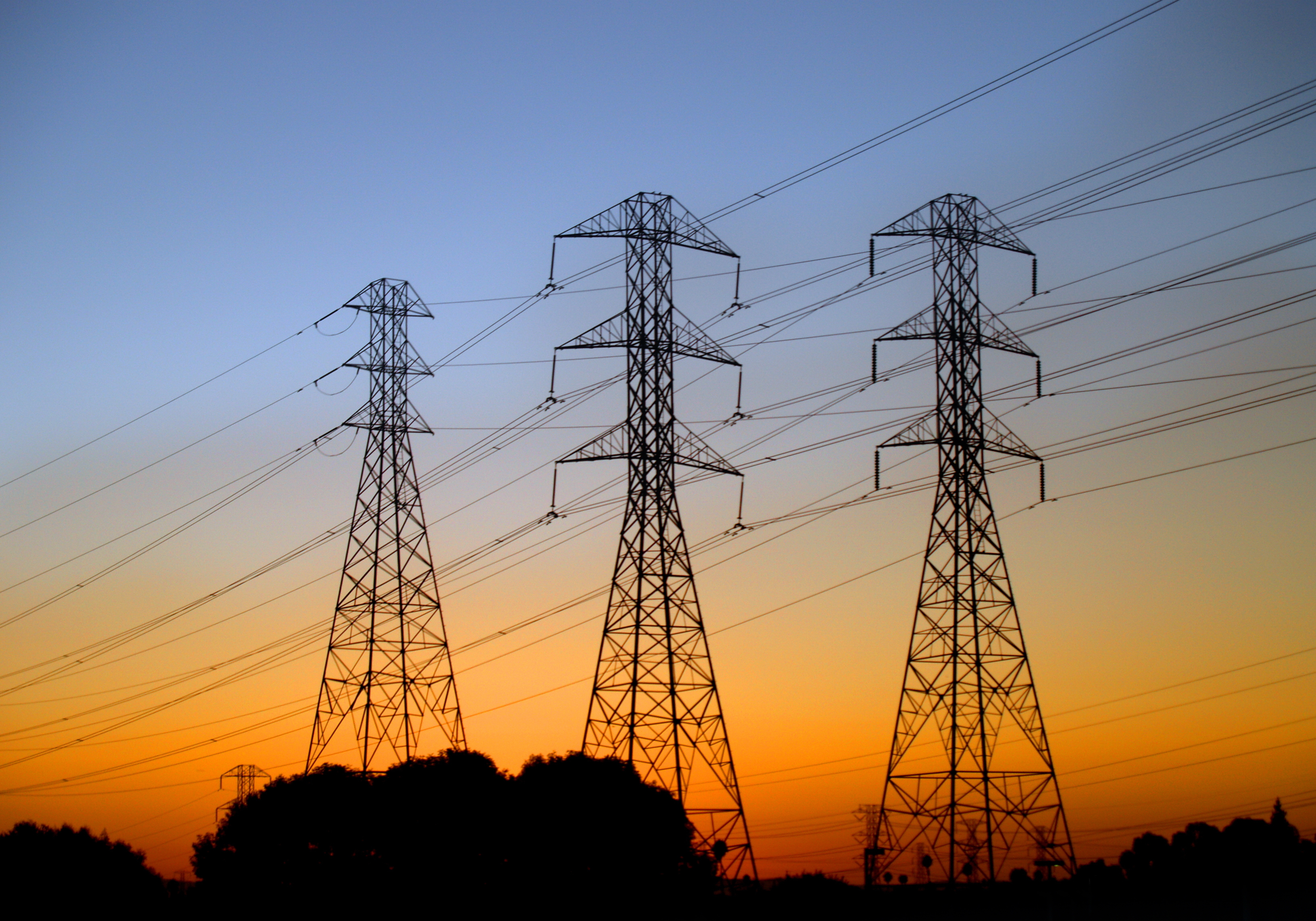 Urban Power Lines Act As Corridors For Both Native And