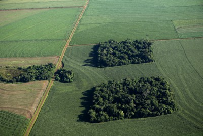 Brazil fragmented forest