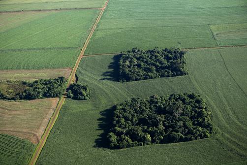 Brazil fragmented forest
