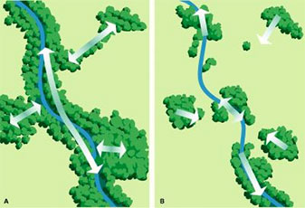 riparian_diagram